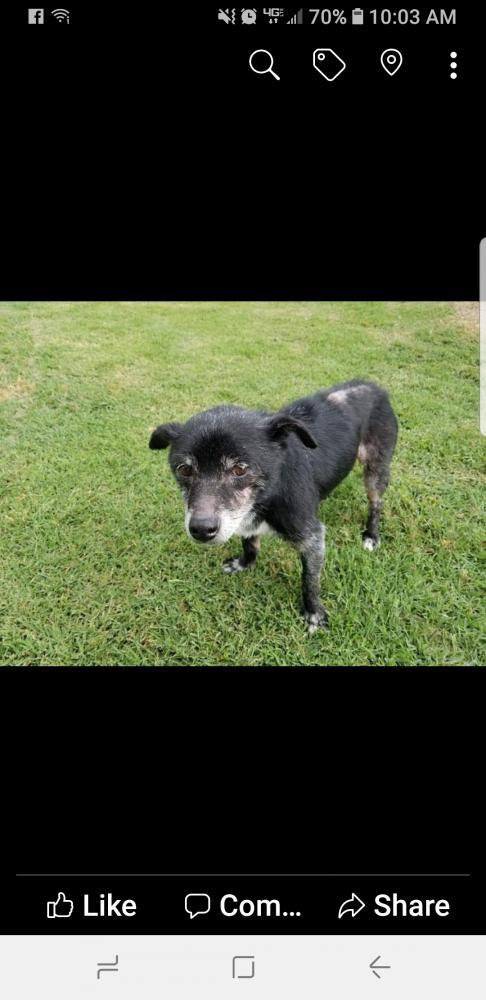 Lost Female Dog last seen Near W 42nd St & south 33rd W. Ave, Tulsa, OK 74107