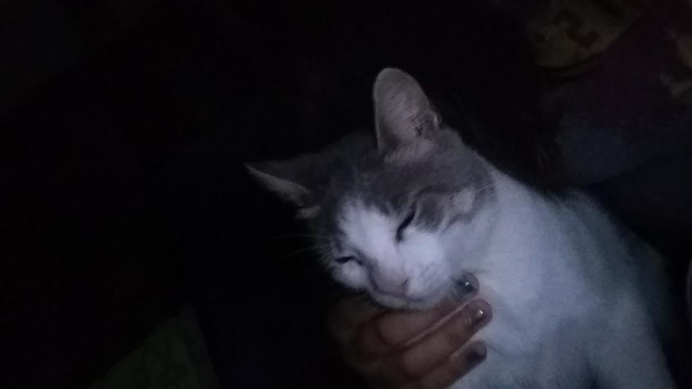 Lost Female Cat last seen Near NE Water St & E Murray St, Victoria, TX 77901