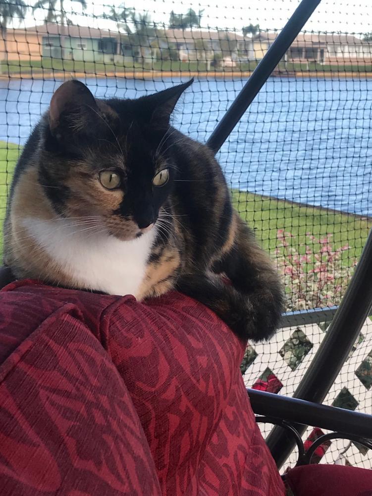 Lost Female Cat last seen Near NW 46th St & NW 47th Terrace, Tamarac, FL 33319
