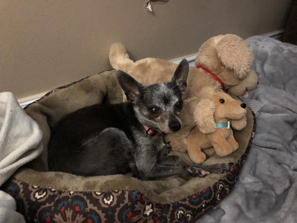 Lost Female Dog last seen Near N State Road 7, Coconut Creek, FL, Coral Springs, FL 33073