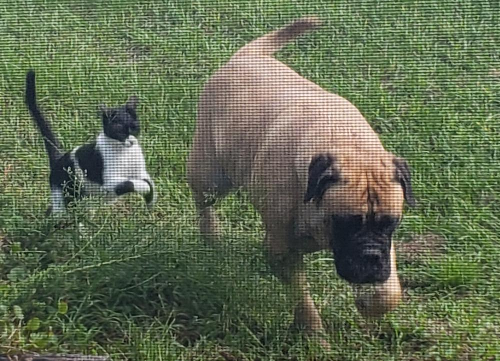 Lost & Found Dogs, Cats, and Pets in Citrus County, FL 34433 - Page