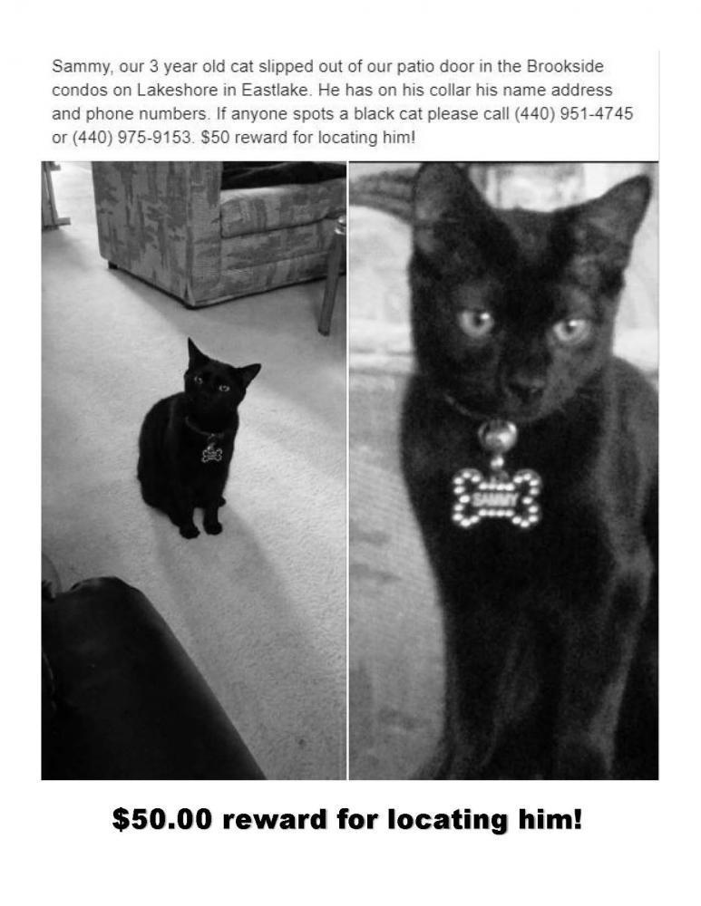 Lost Male Cat last seen Near Marilyn Ln & Heather Ln, Eastlake, OH 44095