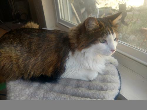 Lost Male Cat last seen Tyler State Park, Tyler, TX 75706