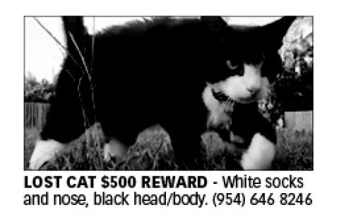 Lost Male Cat last seen Near NE 10th Ave & NE 11th St, Fort Lauderdale, FL 33304