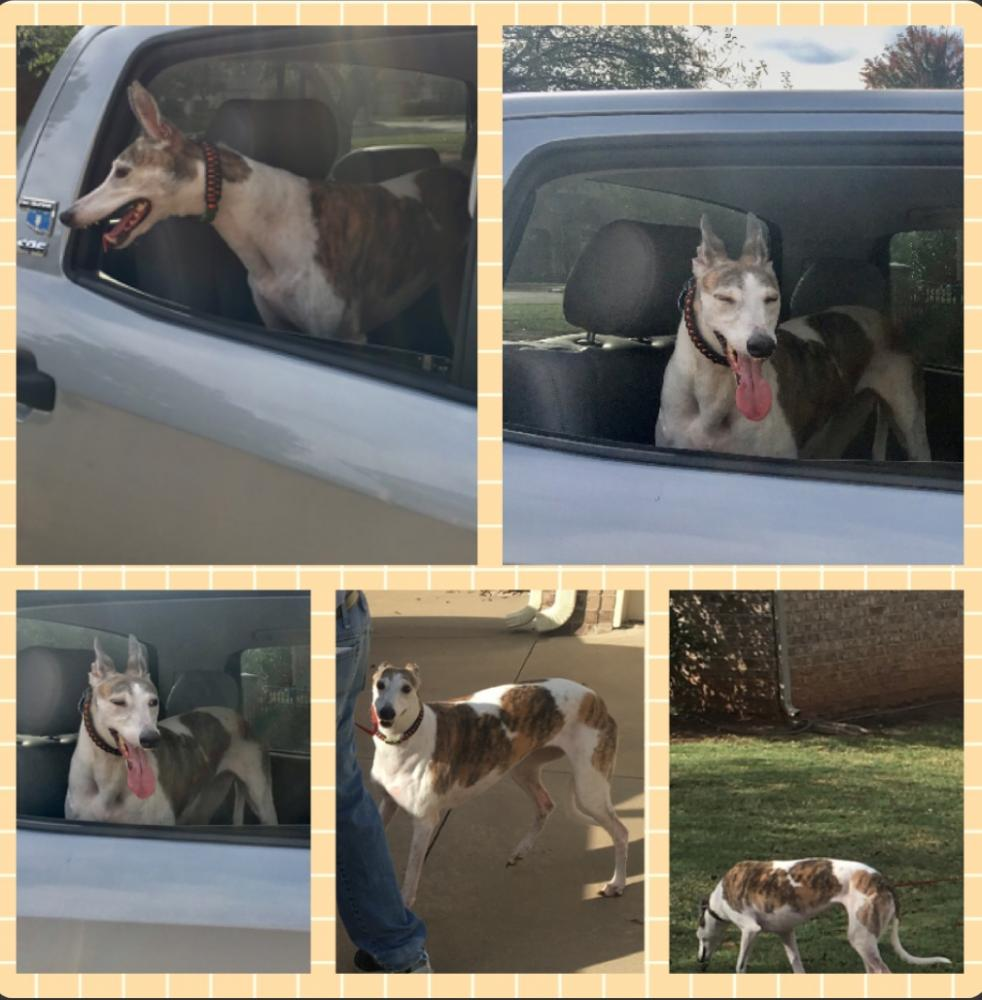 Lost Female Dog last seen North Lake Rd. , Chambers County, TX 77665