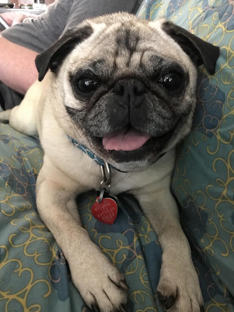 Lost Male Dog last seen Near Englefield Green Dr & Eton Pl, Denton, TX 76207