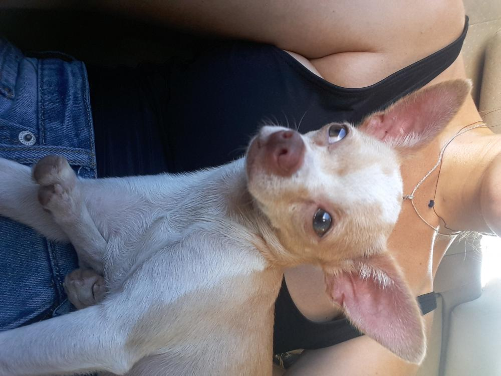 Found/Stray Female Dog last seen Sunrise Blvd , Fort Lauderdale, FL 33316
