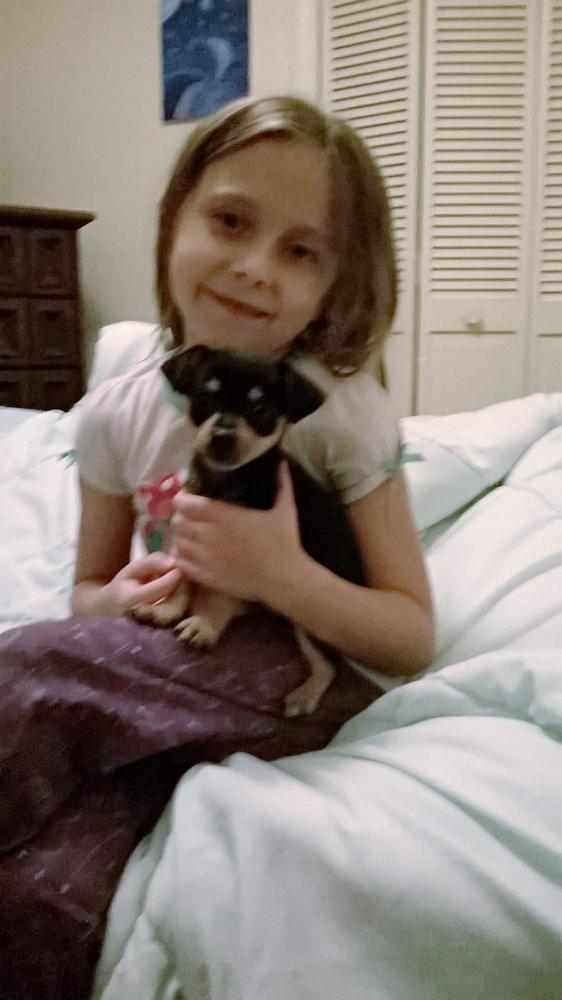 Lost Female Dog last seen Near Co Rd 25A & SE 112 lane, Belleview, FL 34420