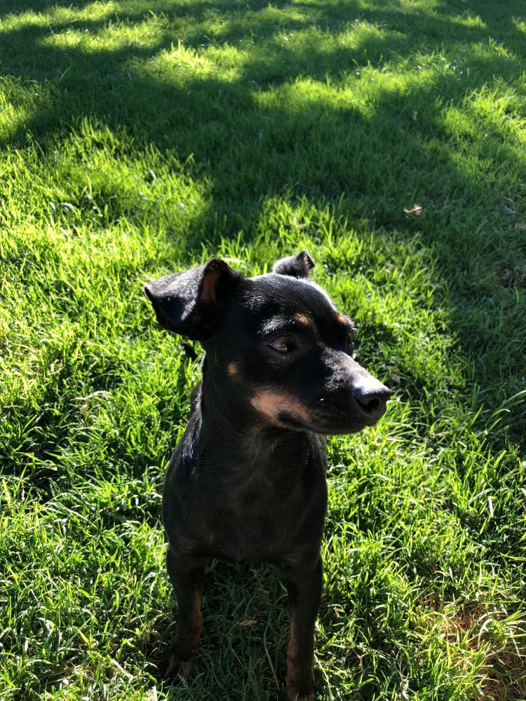 Found/Stray Male Dog last seen Near W Peoria Ave & N 43rd Ave, Phoenix, AZ 85051
