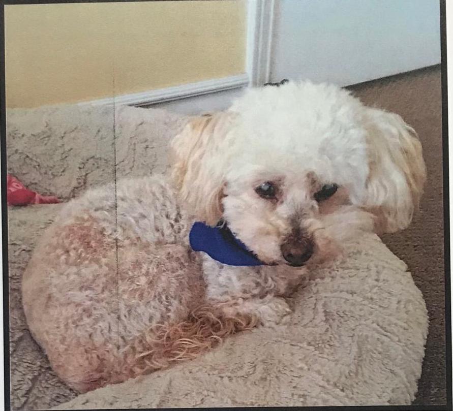 Lost Male Dog last seen Near Norwalk Blvd & 223rd St, Hawaiian Gardens, CA 90716