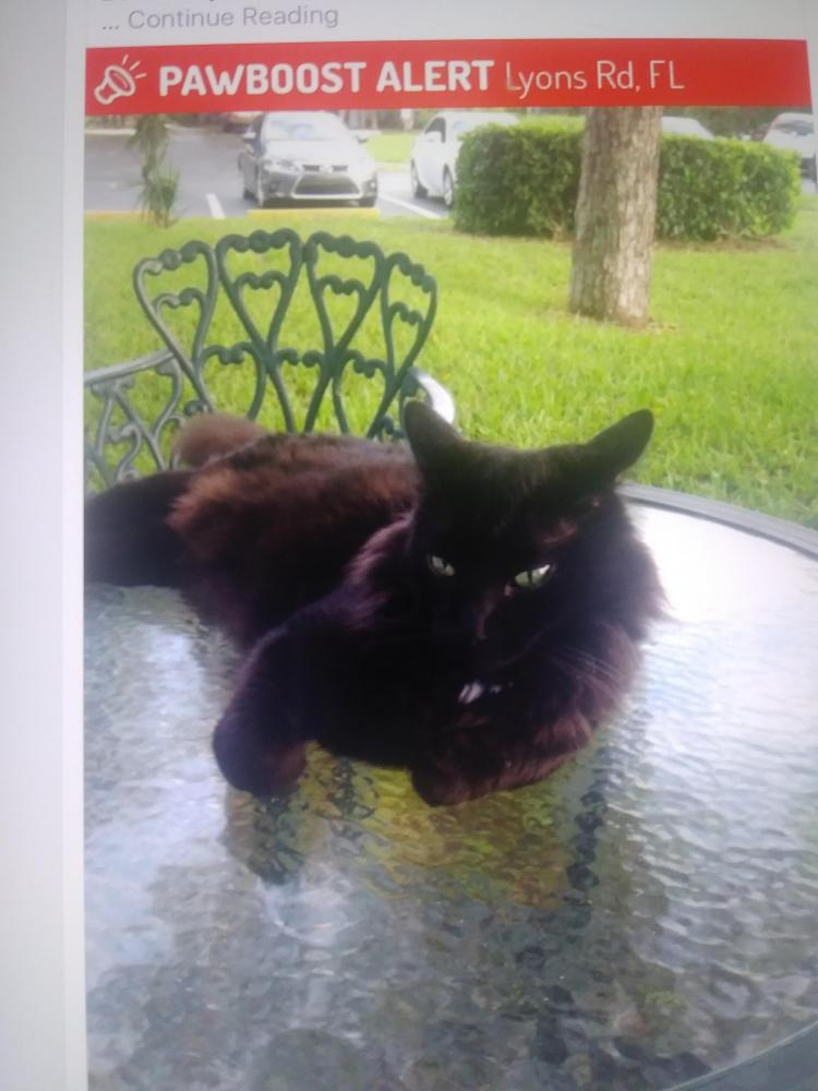 Lost Male Cat last seen Lyons and Clint Moore Boca Landings, Boca Raton, FL 33432