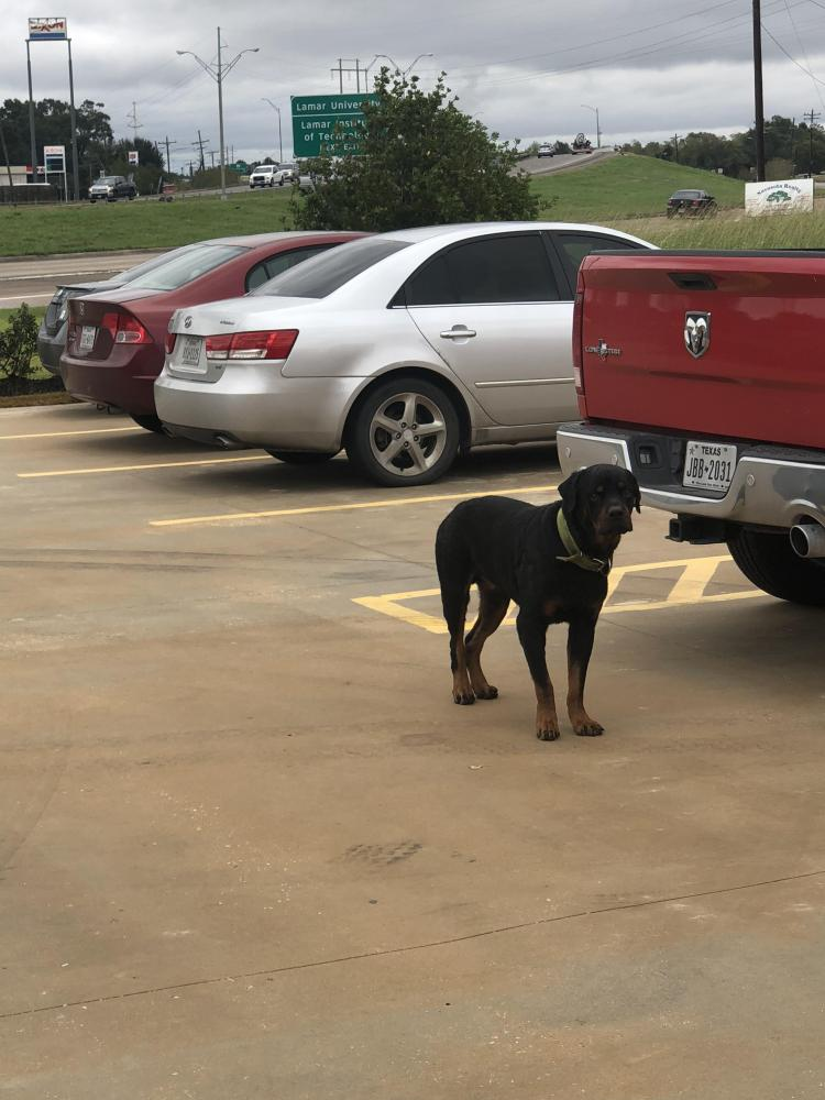 Found/Stray Male Dog last seen Near W Cardinal Dr & S Kenneth Ave, Beaumont, TX 77705