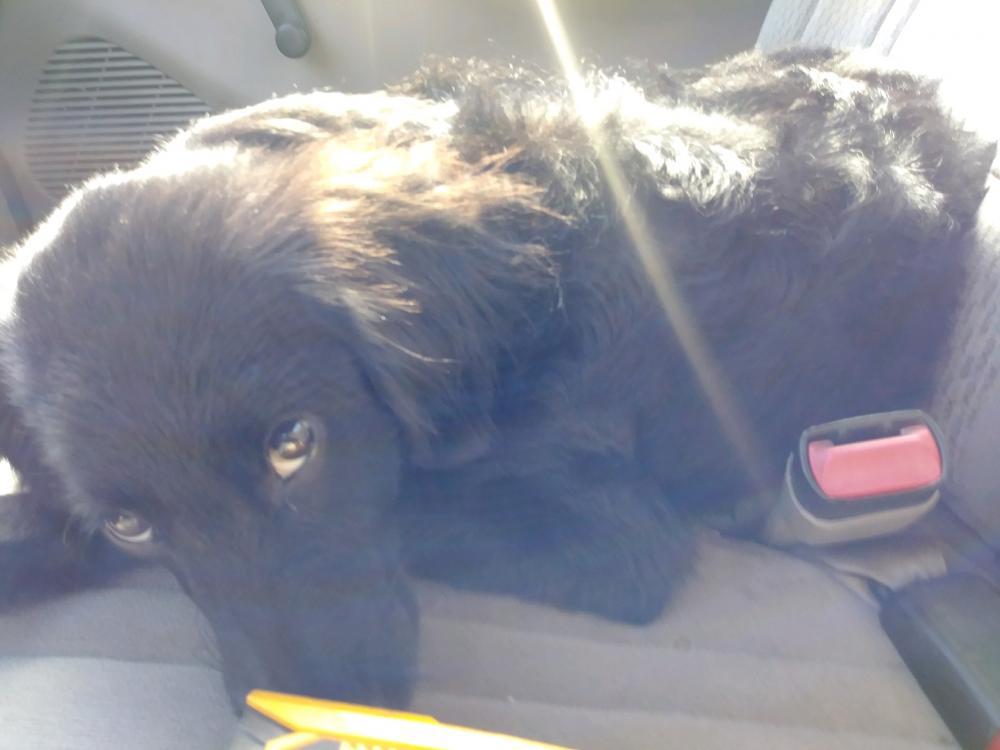Lost Female Dog last seen Pine st & W Davis Loop, Vidor, TX 77662