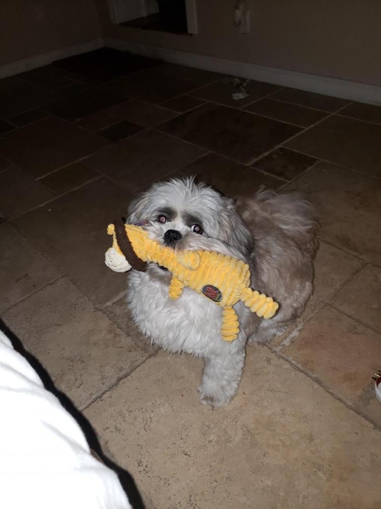 Lost Male Dog last seen Near Middle River Dr & Fryer Pt, Fort Lauderdale, FL 33305