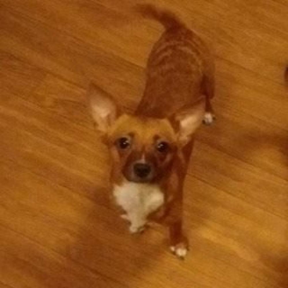 Lost Female Dog last seen Near Timbercrest Village Dr & Sugar Leaf Trl, Harris County, TX 77389