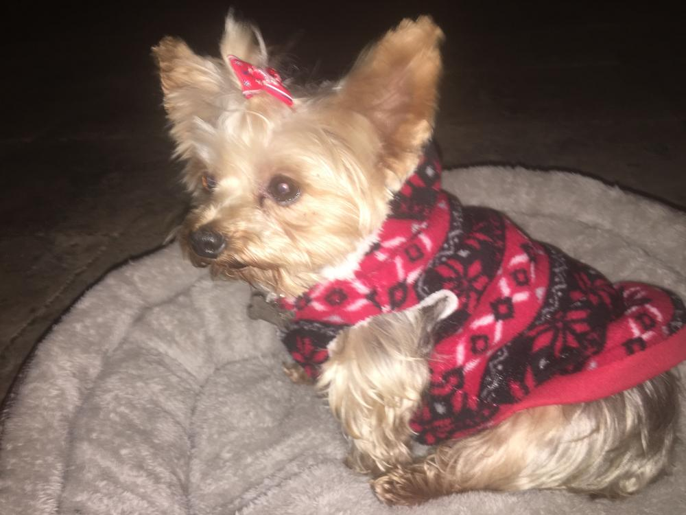 Lost Female Dog last seen Near SW 141st Ter & SW 53rd St, Miramar, FL 33027
