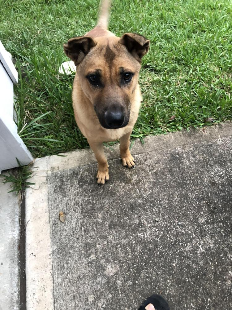 Found/Stray Male Dog last seen Near Remington Park Dr & Remington Glen Ct, Harris County, TX 77073