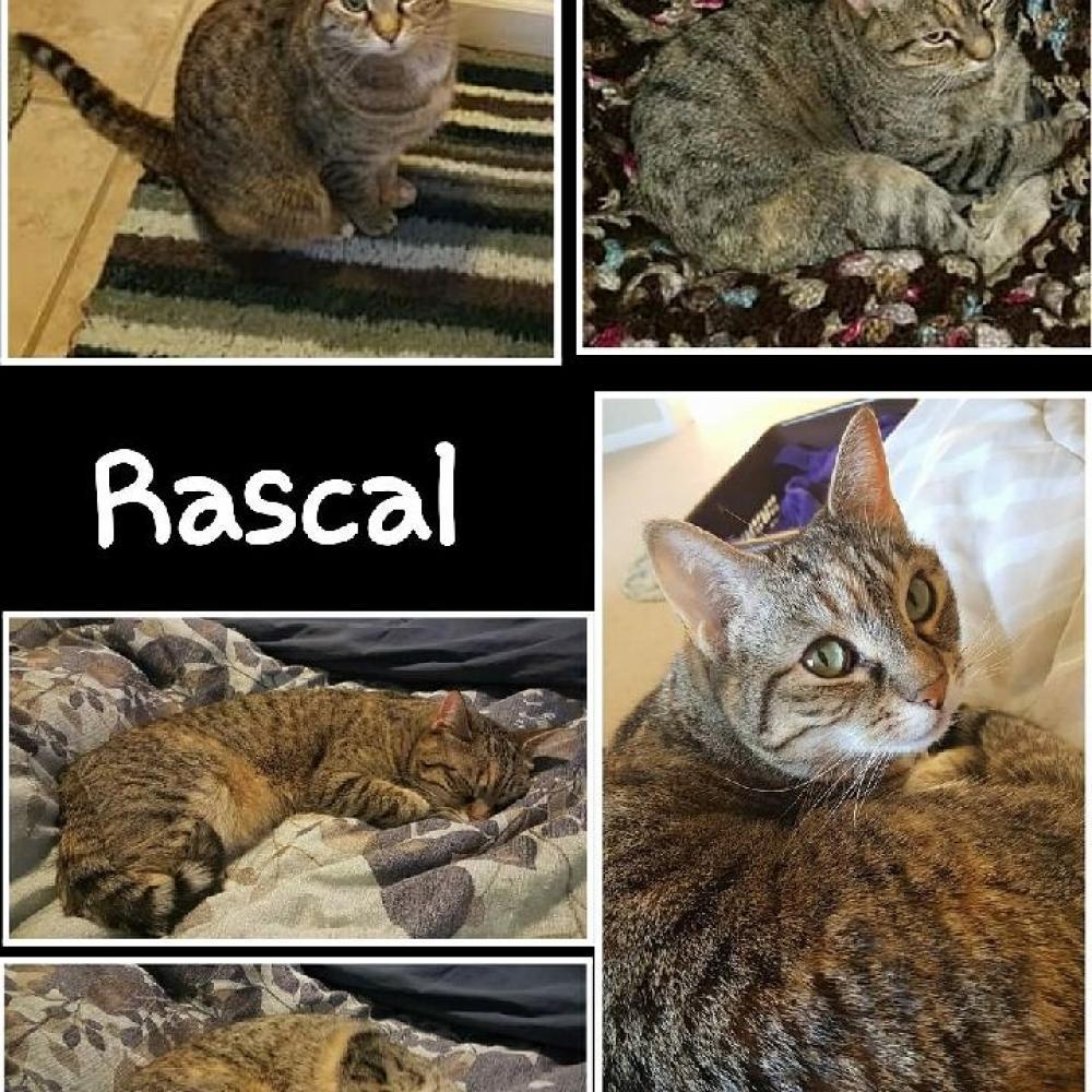 Lost Female Cat last seen Near Baldwin Dr & Nikitin Way, Beattystown, NJ 07840