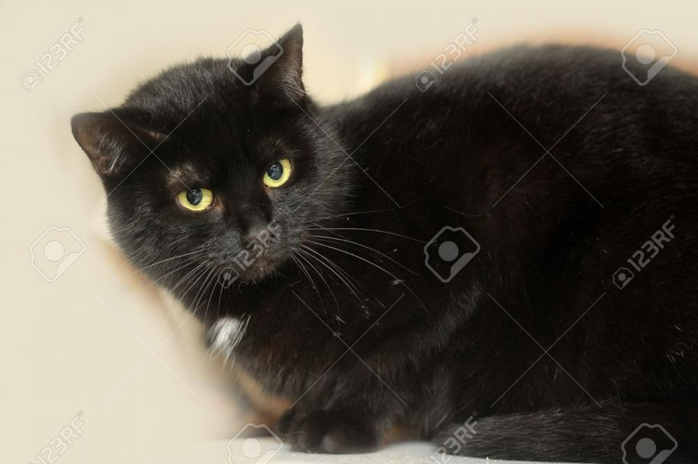 Lost Female Cat last seen Near Hickox Blvd & Middlebrook Blvd, Middleburg Heights, OH 44130