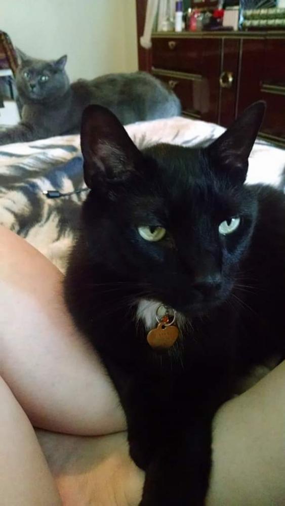 Lost Male Cat last seen BP gas station Knuth Rd., Boynton Beach, FL 33436