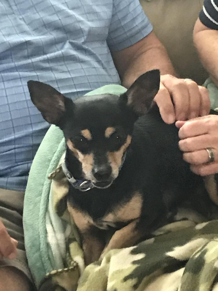 Lost Male Dog last seen Near Royal Palm Dr & S Colonial Dr, Boynton Beach, FL 33436
