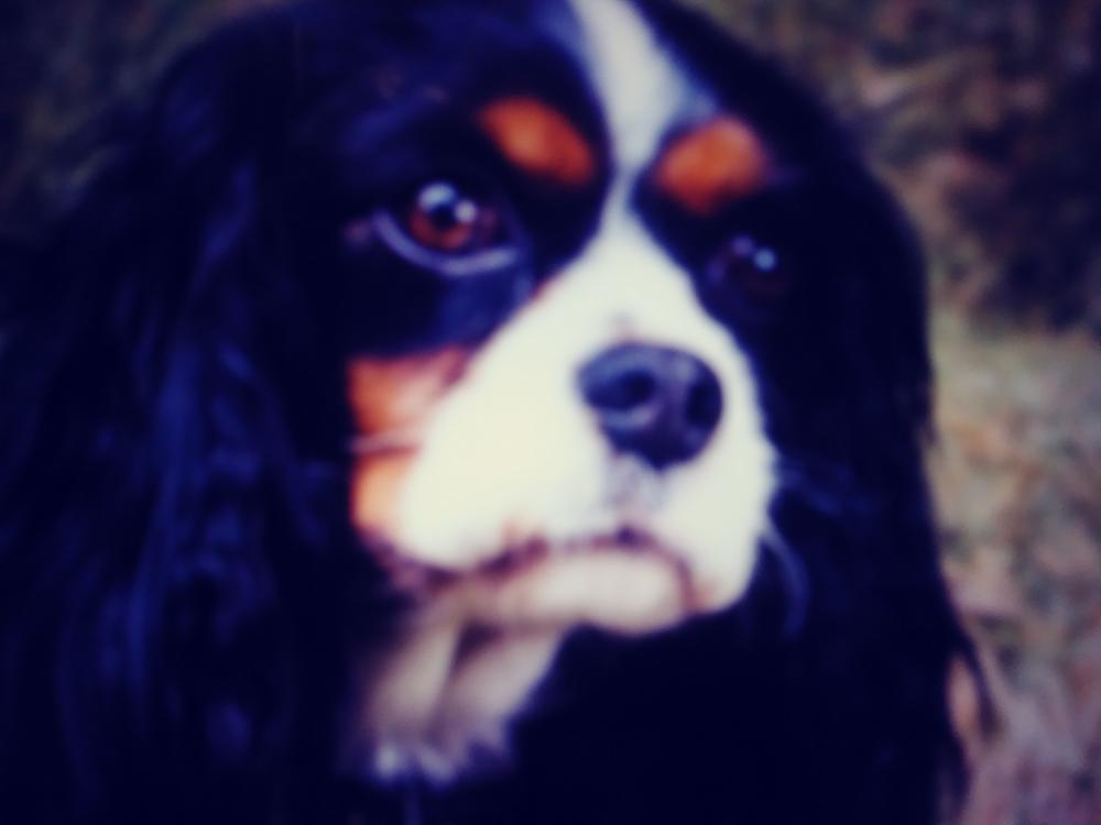 Lost Female Dog last seen Near Watermark Blvd & SE 6th Ave, Dania Beach, FL 33004