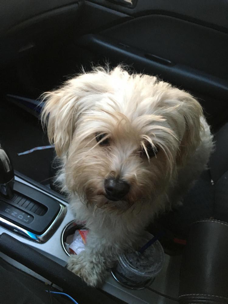 Found/Stray Male Dog last seen Near NW 76th Ave & W Atlantic Blvd, Margate, FL 33063