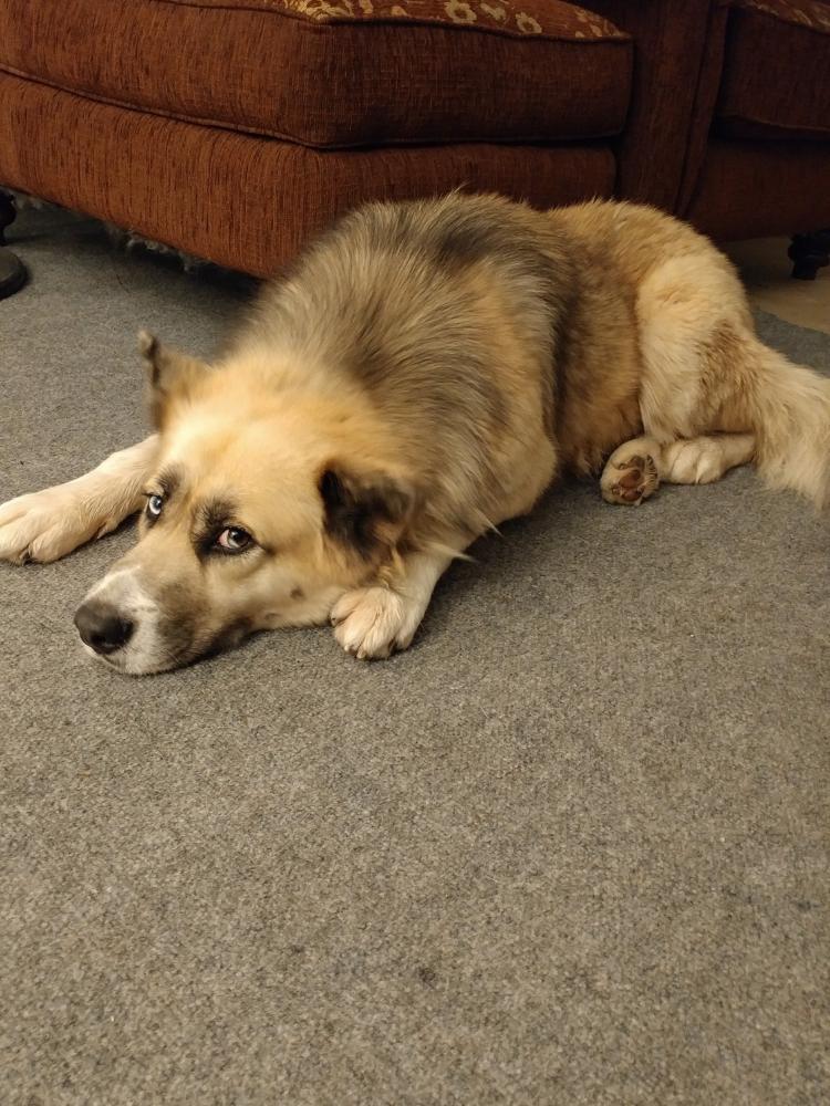 Found/Stray Male Dog last seen Near Colony Creek Drive, Harris County, TX 77379