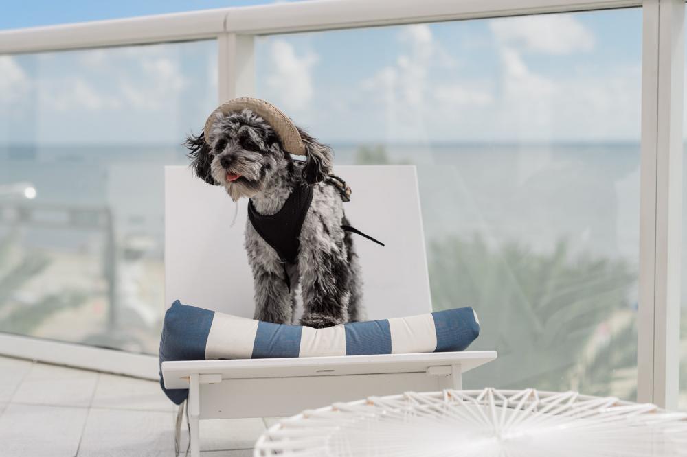 Lost Male Dog last seen Near NE 62nd St, Ft Lauderdale 33308 Imperial Point, Broward County, FL 33334