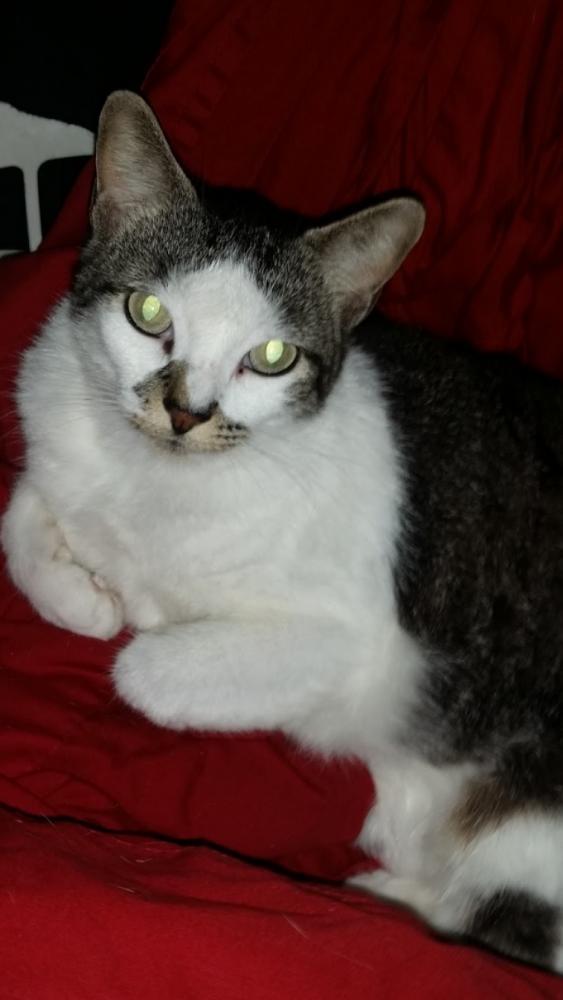 Lost Female Cat last seen Near Cane Creek Ct & Cane Creek Dr, Houston, TX 77070