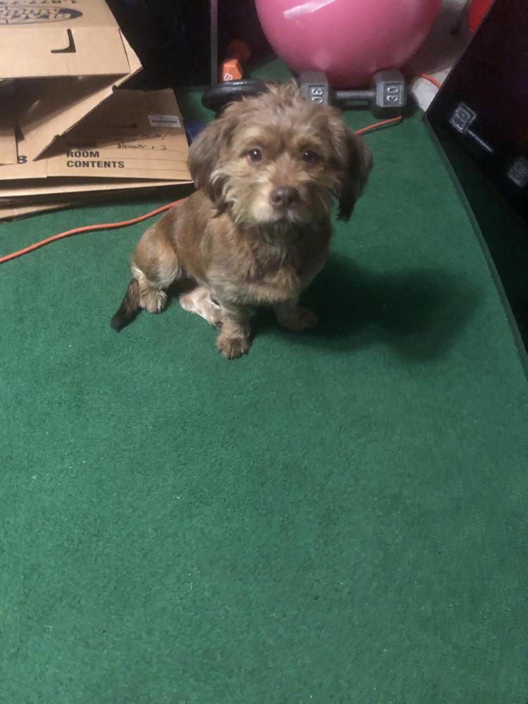 Found/Stray Female Dog last seen Near Bourgeois Rd & Bammel N. Houston, Tomball, TX 77375