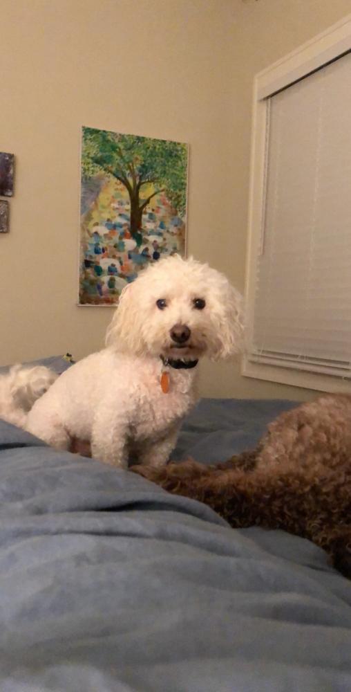 Found/Stray Male Dog last seen Near N McLean Blvd & Poplar Ave, Memphis, TN 38112