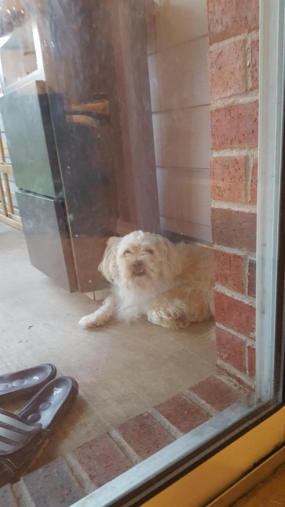 Lost Male Dog last seen Near Chadwick Dr & Center Ridge Dr, Fort Worth, TX 76131
