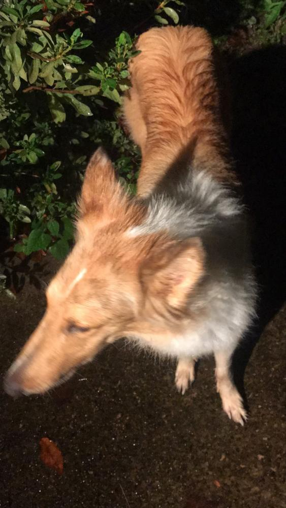 Found/Stray Unknown Dog last seen Near Lamp Post Ln & Lamplighters Cove Rd, Hall County, GA 30504