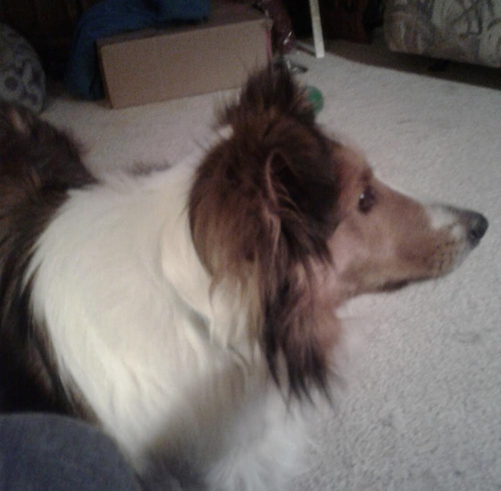 Lost Male Dog last seen Near Daisy Dallas Rd & Hixson St, Soddy-Daisy, TN 37379
