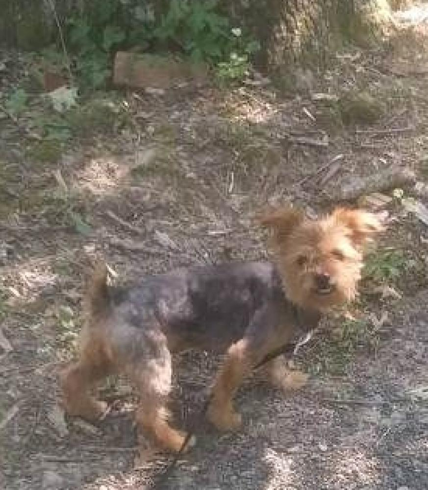 Lost Female Dog last seen Near Allentown Rd & Griff Dr, Fort Washington, MD 20744