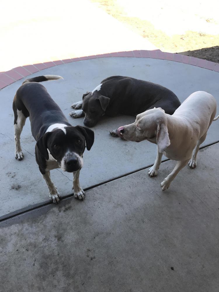 Lost Male Dog last seen Near Troth St & 54th St, Jurupa Valley, CA 91752