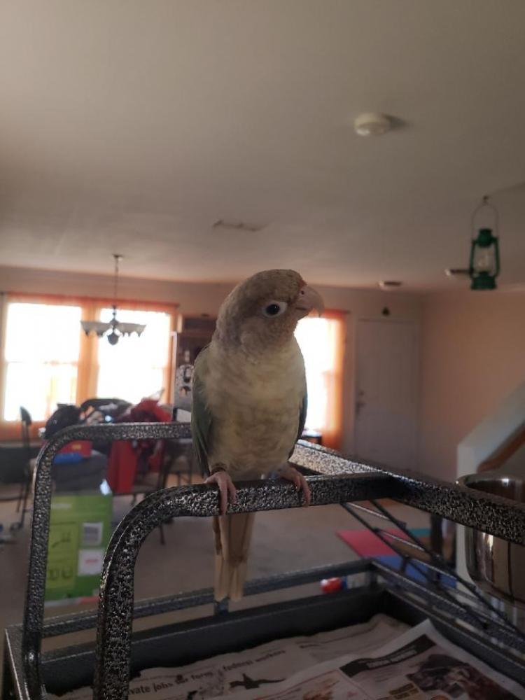 Lost Unknown Bird last seen Near Hermitage Dr & Meridian St, Florence, AL 35630