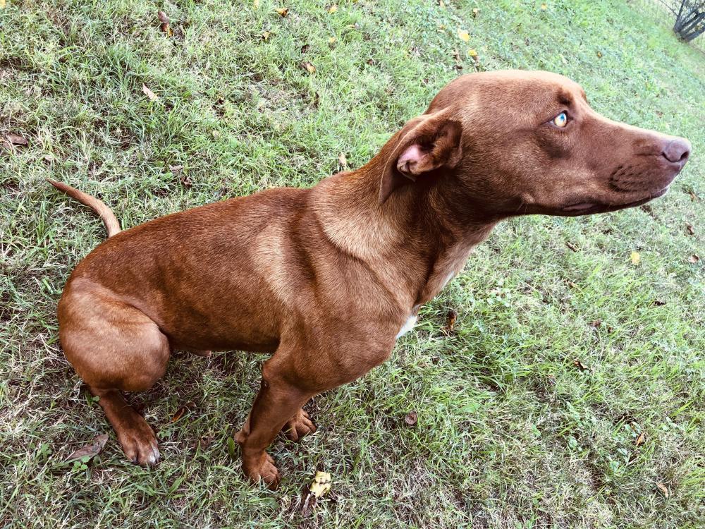 Found/Stray Male Dog last seen CR 359 Hawley Texas , Jones County, TX 79525