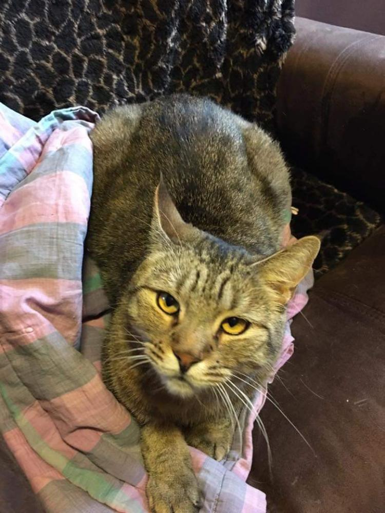Lost Male Cat last seen Near Driftwood Rd & 17th Ave E, Clearwater, MN 55320