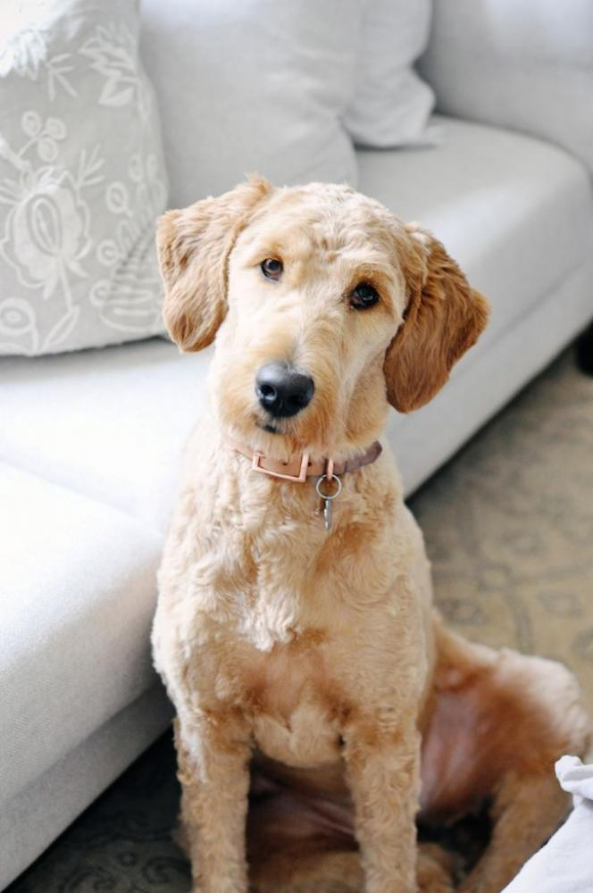 Lost Female Dog last seen Near McCombs St & Sean Haggerty Dr, El Paso, TX 79924