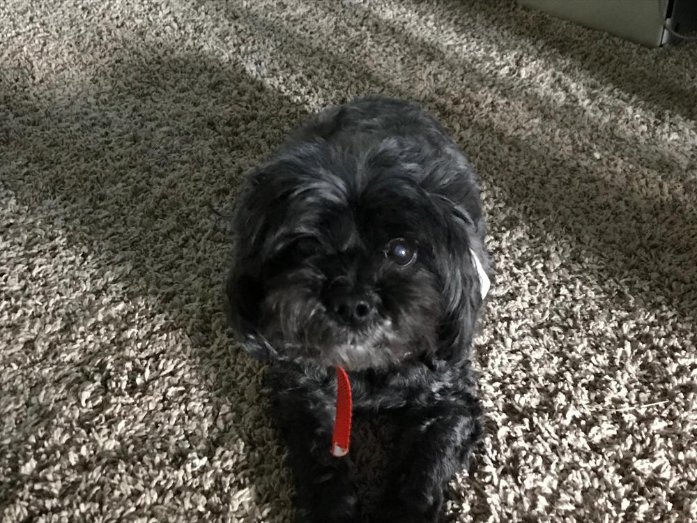 Lost Male Dog last seen Near Piedmont Golf Course Rd & Old Pelzer Rd, Piedmont, SC 29673