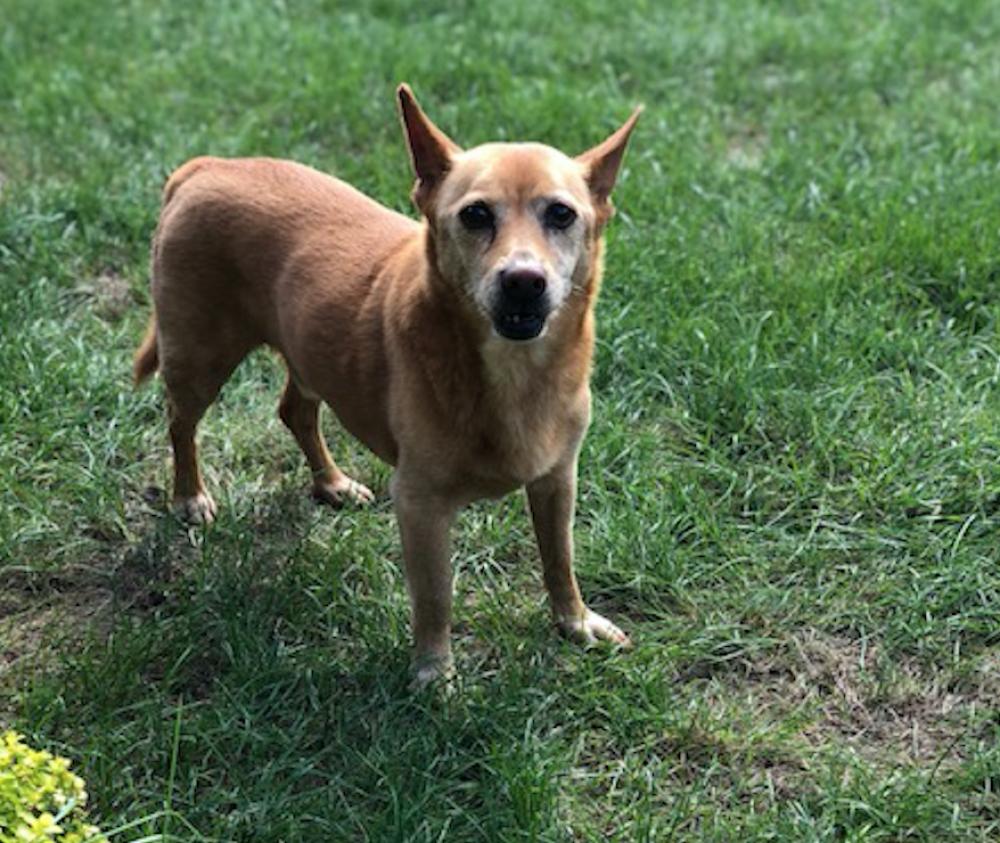 Lost Male Dog last seen Near Timberwood Ln & Radcliff Ln, Cincinnati, OH 45241