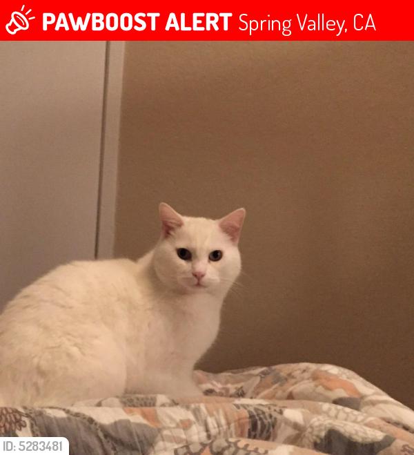 Lost Male Cat last seen Near Meadowridge Ln & Moundglen Ln, Spring Valley, CA 91977