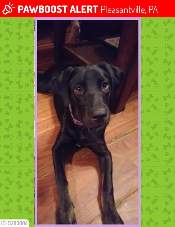 Lost Female Dog last seen Near Titusville Rd & Harvey Rd, Pleasantville, PA 16341