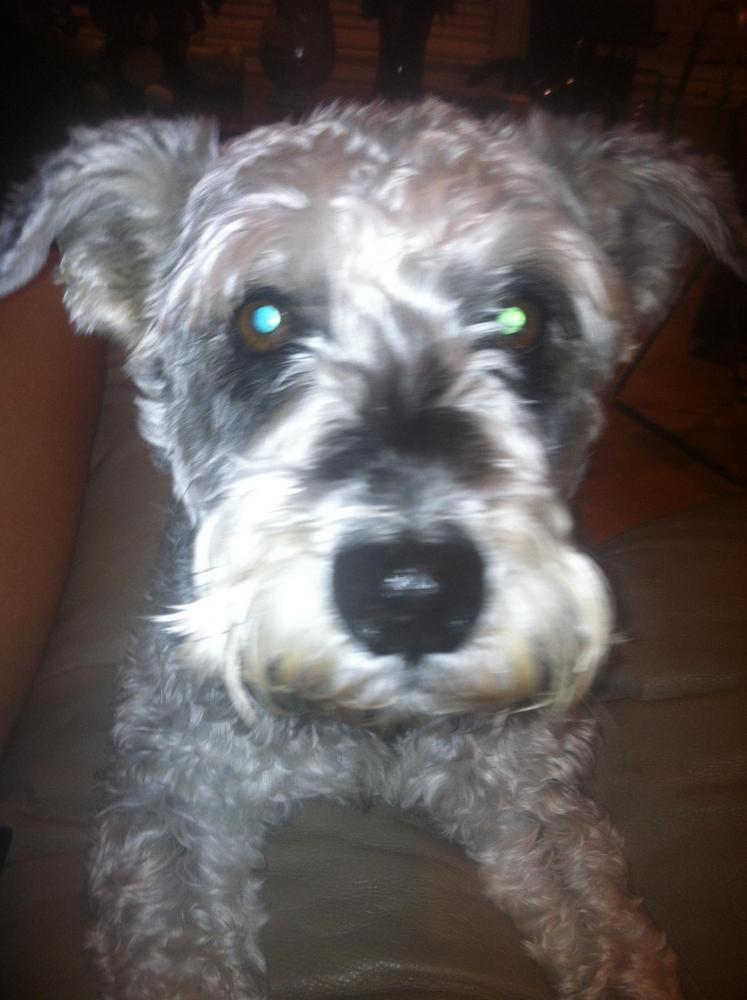 Lost Male Dog last seen Dowlen Road/ Barrington Heights, Beaumont, TX 77706