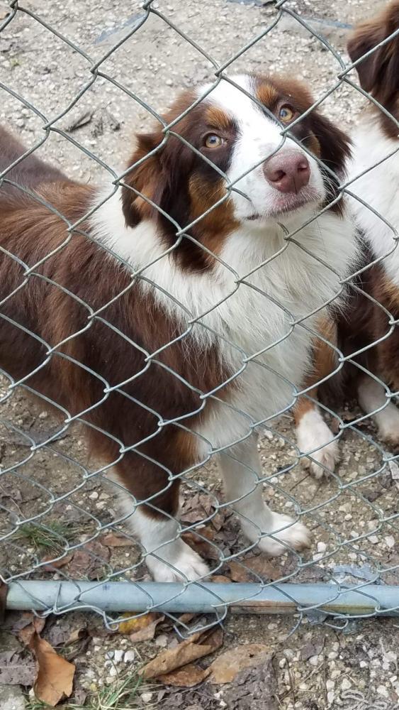 Lost Female Dog last seen Near Sugarmill Rd & Lakeview Cutoff , Vidor, TX 77662