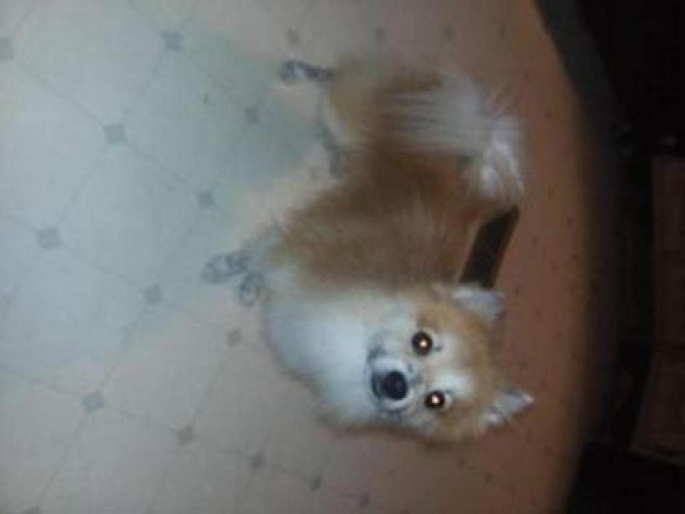 Lost Male Dog last seen Near N 23rd St & Harrison Ave, Beaumont, TX 77706