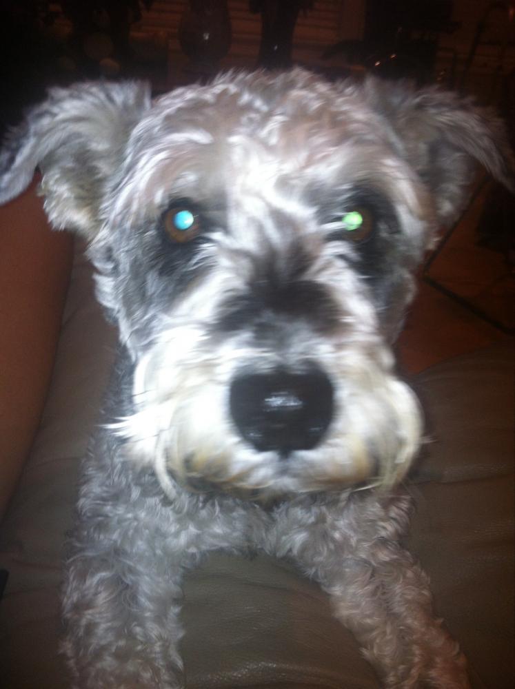 Lost Male Dog last seen Near W Lucas Dr & Delaware St, Beaumont, TX 77706