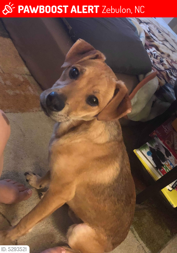 Lost Male Dog last seen Near N Arendell Ave & W Gannon Ave, Zebulon, NC 27597